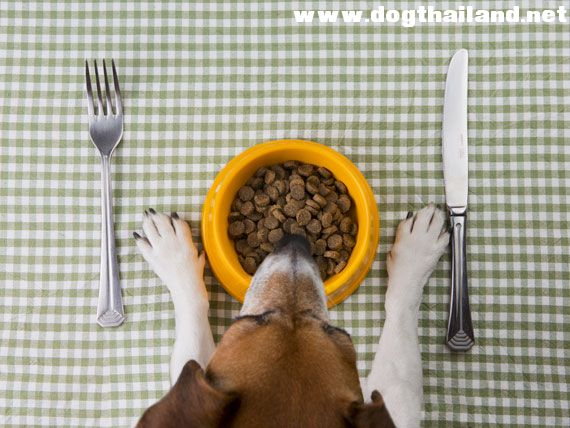 dog-food-shutterstock_230791006.jpg