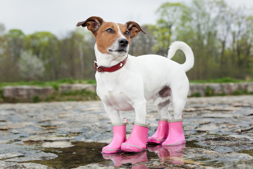 bigstock-Dog-In-The-Rain-62796631-840x560.jpg