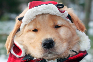 25-dogs-bundled-up-for-winter-1-2548-1358953825-0_big.jpg