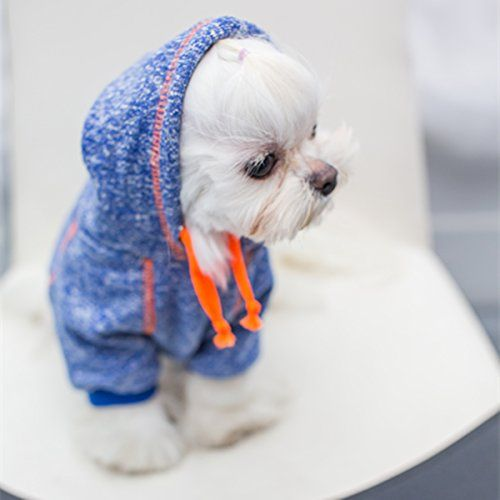 cbdd4f122ec546116914eadff9f8d169--dogs-diy-clothes-dog-clothing-diy.jpg