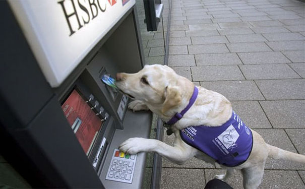 dogs-protect-atm-104-59cb50381d4dc__605.jpg
