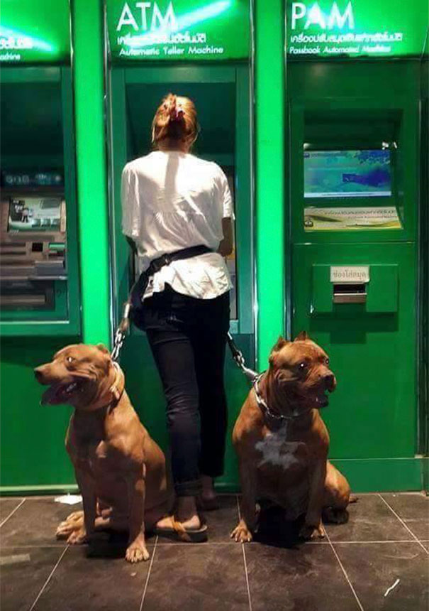 dogs-protect-atm-103-59cb4d7817039__605.jpg