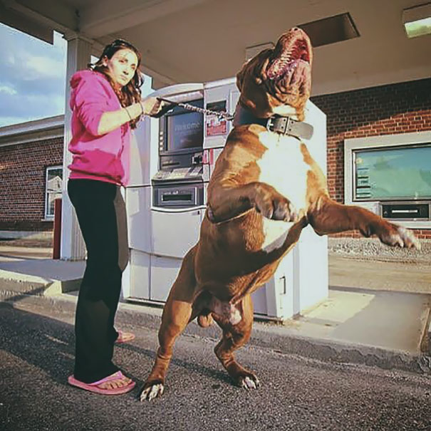 dogs-protect-atm-111-59cb5bc5c6320__605.jpg
