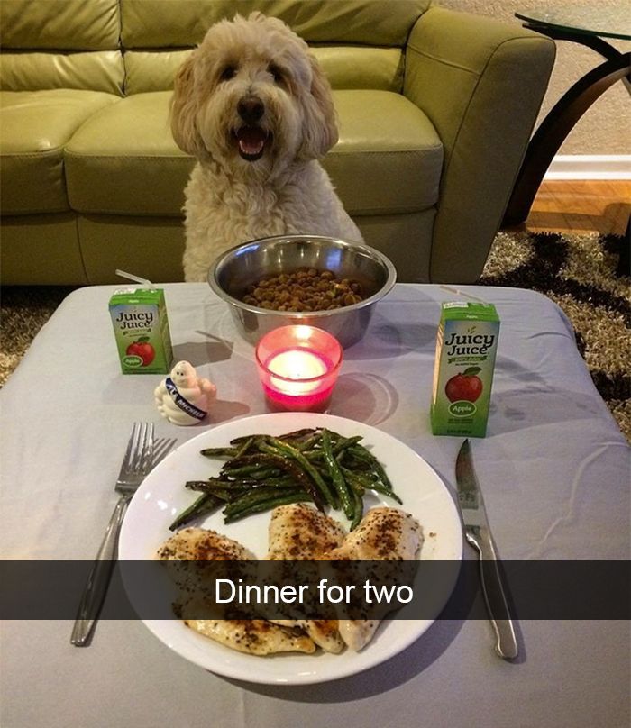 spoiled-dogs-that-live-better-than-you-10-59afb1488a4d3__700.jpg
