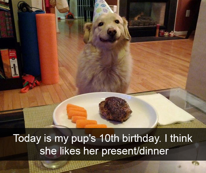 spoiled-dogs-that-live-better-than-you-107-59c3855a8462e__700.jpg