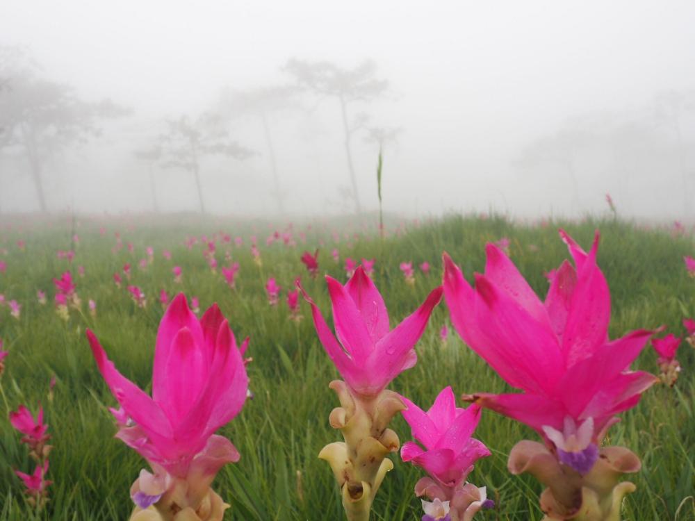ผลการค้นหารูปภาพสำหรับ ภาพที่เที่ยวในไทย