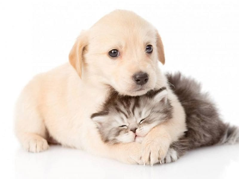 cat_and_dog-1484856794-6718.jpg