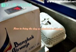 How to travel with dog as checked-in baggage (AVIH) on the plane